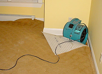 Wet Carpet Drying